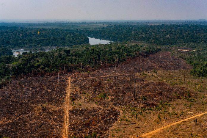 desmatamento licenciamento ambiental
